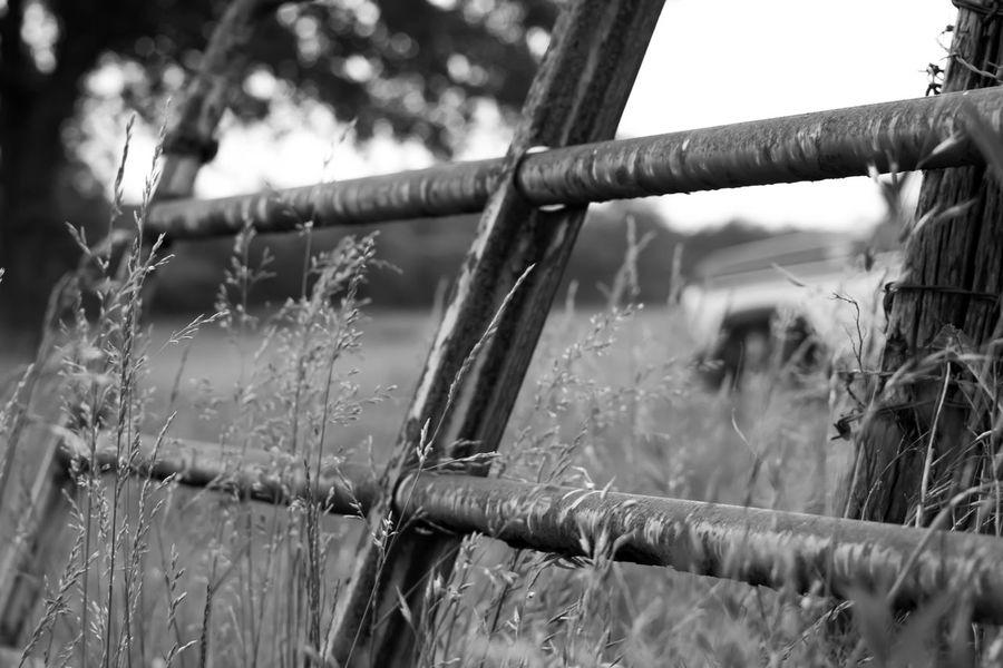 Fence Outdoors Taking Photos The Great Outdoors - 2015 EyeEm Awards Bnw_friday_eyeemchallenge Shades Of Grey