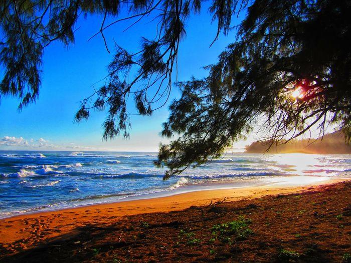 Beach Sea Water Scenics Shore Tranquil Scene Tree Horizon Over Water Tranquility Beauty In Nature Sunlight Nature Sand Blue Coastline Wave Non-urban Scene Sky Sun Sunny An Eye For Travel