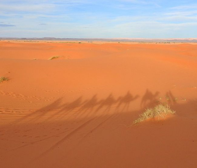 Check This Out Hello World Hanging Out Relaxing Enjoying Life Scenery View Morocco Riding Shadows Sand Dunes Desert Life Desert Camel Sahara Desert Merzouga Camel Riding Scenic View