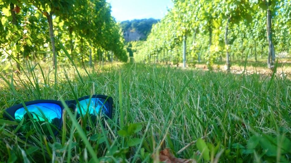 Green Grass Wineyards Sunglasses Outside Hawkers The Secret Spaces