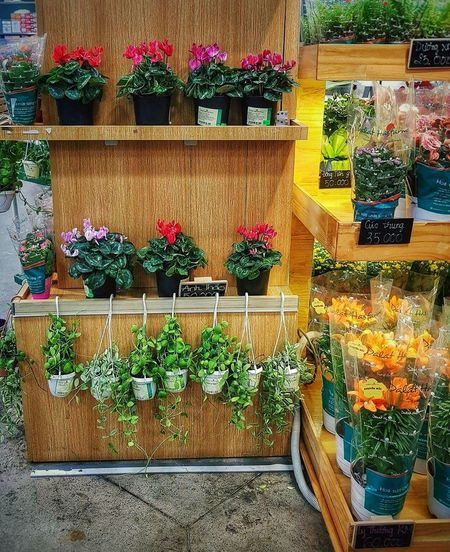 For Sale Retail  Variation Flower Small Business Potted Plant Choice Arrangement Multi Colored Store High Angle View Day Market No People Flower Shop Consumerism Outdoors Plant Large Group Of Objects Growth Hoa Emart Photography Vietnam Picoftheday EyeEmNewHere