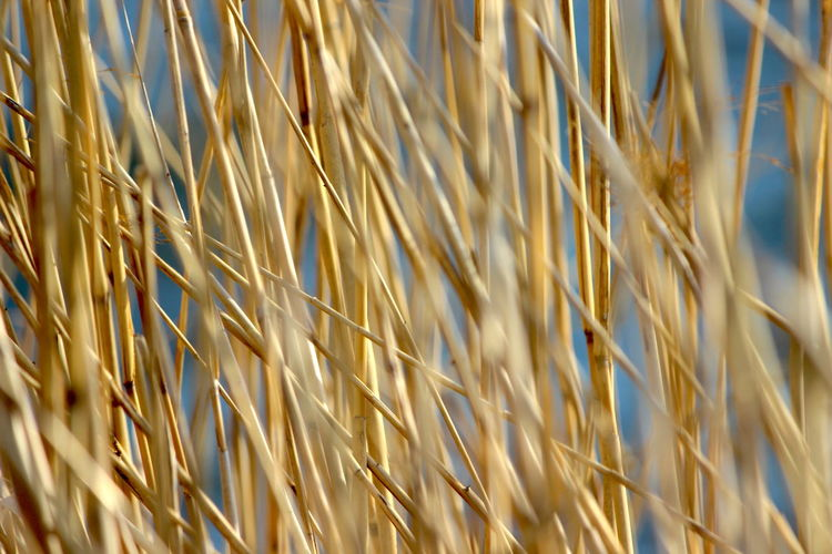Full Frame Backgrounds Plant No People Agriculture Selective Focus Growth Nature Close-up Crop  Cereal Plant Pattern Day Sunlight Grass Beauty In Nature Brown Field Gold Colored Outdoors