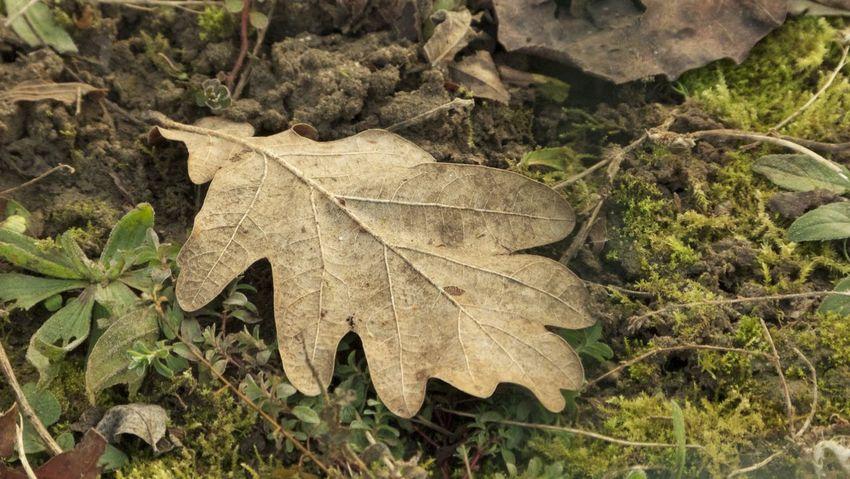 The autumn leaf Leaf Nature Outdoors Autumn Panasonic Fz100