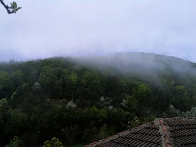Tree Roof Mountain No People Outdoors Day Sky Architecture Nature Beauty In Nature Mist Misty Morning Misty Mountains  Misty Forest Forest