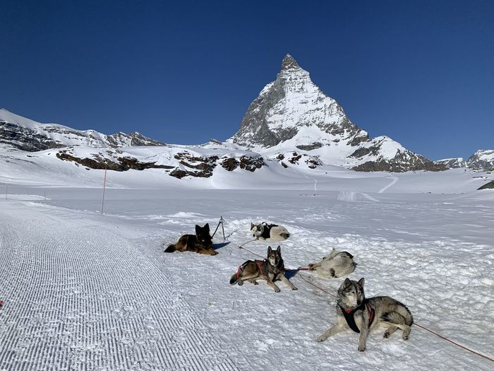 View of dogs on snowcapped mountain against sky