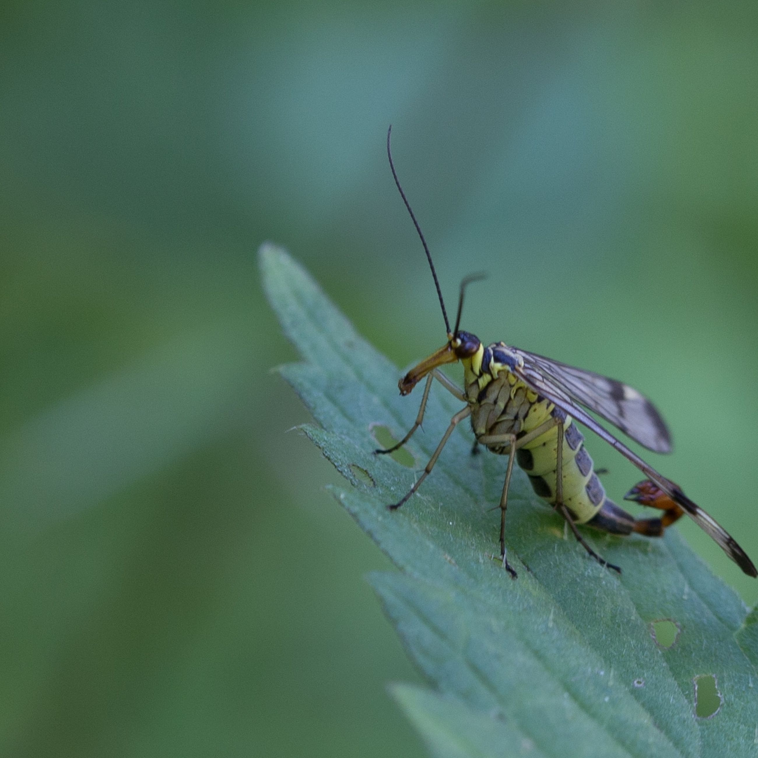 invertebrate, insect, animals in the wild, animal themes, animal wildlife, animal, one animal, plant part, leaf, green color, close-up, day, selective focus, plant, no people, nature, animal wing, outdoors, zoology, beauty in nature, animal eye