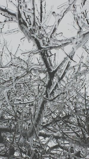 Covered in ice. Tree Silhouette Cold Weather Frozen Nature Icicles Frozen IceStorm Ice Ice Baby Cold As Cold As Ice Winter WonderlandWinterscapes Wintertime Winter Wonderland