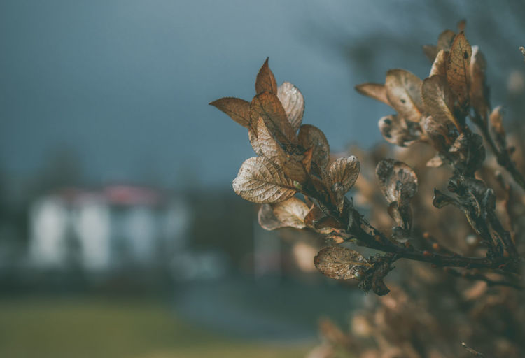 Plant Nature Focus On Foreground Close-up Vulnerability  Fragility Beauty In Nature Flower No People Growth Dry Day Flowering Plant Selective Focus Outdoors Dried Plant Leaf Plant Part Field Dead Plant Wilted Plant Dried Leaves