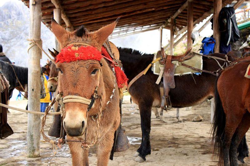 Close-Up Portrait Of Donkey