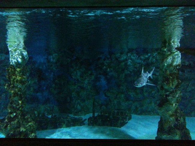Animals Swimming Fish