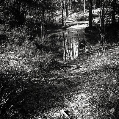 There's a few new obstacles for trailrunners when winter starts to go away... Trailrunnning Trails Forest Gjelleråsmarka Stovner Groruddalen Oslo Visitnorway Utno Få15 Outdoors Aktivinorge Running Trailrunner 👍🙌🏃🌲