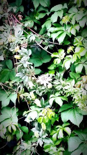 Strenger Flowers,Plants & Garden Nature Photography