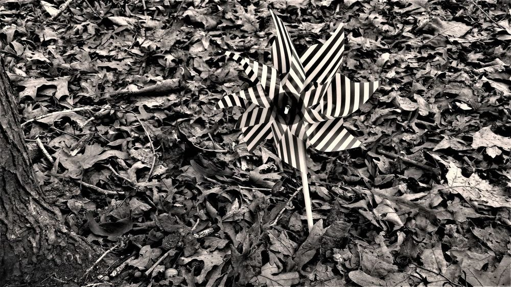 Alone Blackandwhite Photography Close-up Day High Angle View Leaf Nature No People Outdoors Pin Wheel Woods Greyscale EyeEmNewHere Leaves 🍁 Lost In The Landscape The Graphic City Shades Of Winter Inner Power Go Higher This Is Queer Visual Creativity