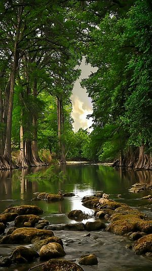 Water Tree Nature Lake Reflection Beauty In Nature Outdoors