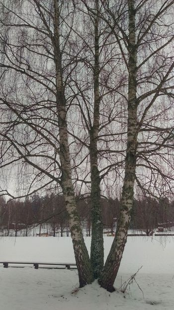 It's Cold Outside Tree Winter Scene Snow Covered Forest View Kolmården Winter EyeEm Gallery Sweden Scandinavia Scandia Northern Europe Snow Snow ❄ Nature