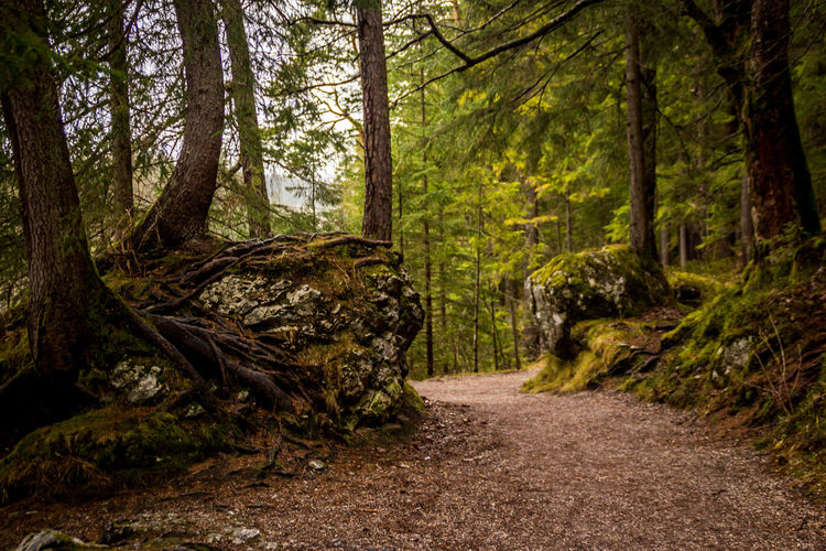 Forest Tree Land Plant Tree Trunk WoodLand Trunk Tranquility Non-urban Scene Footpath Tranquil Scene Nature Landscape Beauty In Nature Direction The Way Forward Dirt No People Scenics - Nature Road Outdoors