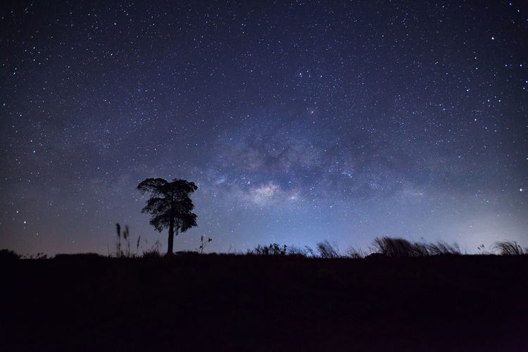 Silhouette of tree against star field at night