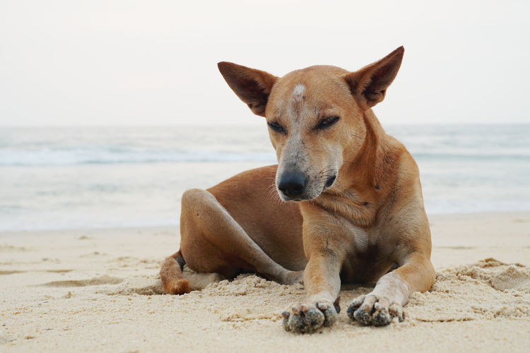 Portrait of a dog on beach