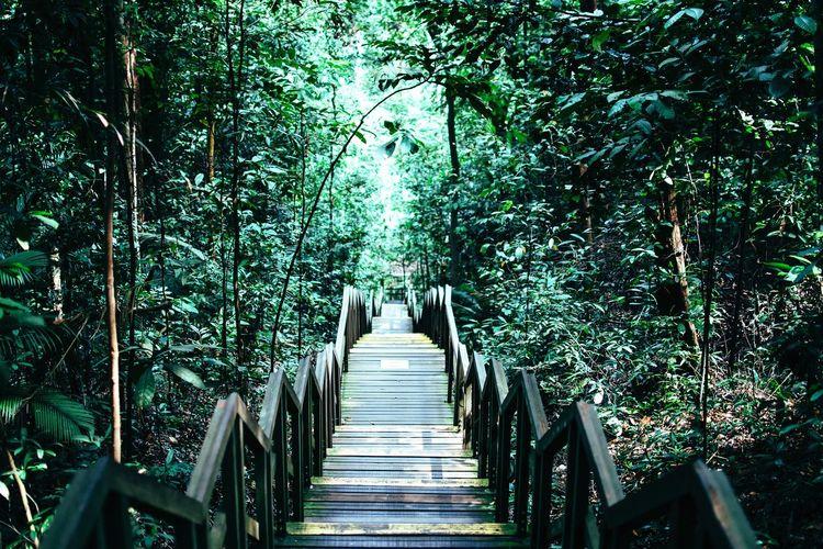 View of boardwalk leading towards trees