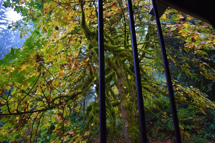 Autumn Beauty In Nature Branch Day Forest Growth Leaf Nature No People Outdoors Scenics Tranquility Tree