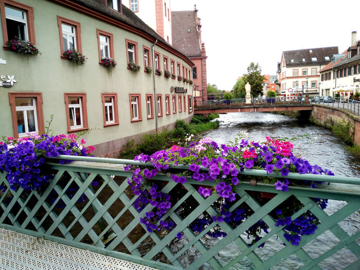 Beauty In Nature Bridge Day Flower Nature Purple River Water