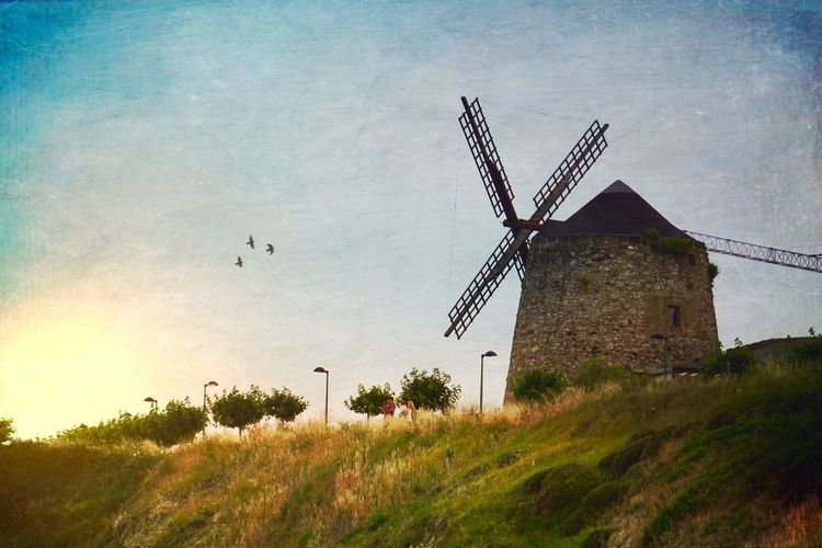 Built Structure Architecture Sky Building Exterior Growth Windmill Outdoors Tree Nature No People Plant Wind Turbine Day Renewable Energy Beauty In Nature Nature Landscape Light And Shadow Color Animals In The Wild Sunset_collection Travel Country Tranquil Scene Love