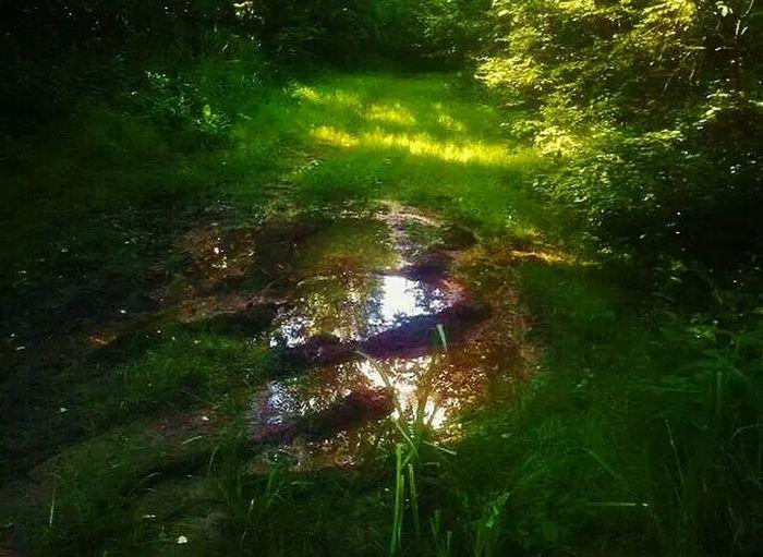 mirror, , Klundert Water Reflections