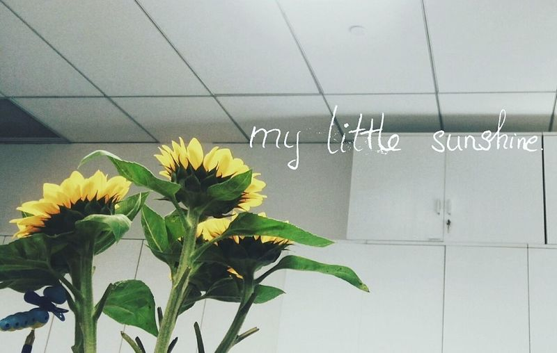 Flower Handwriting
