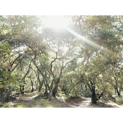 That summer sun. VSCO Vscocam Lastrampas SanRamon california hiking