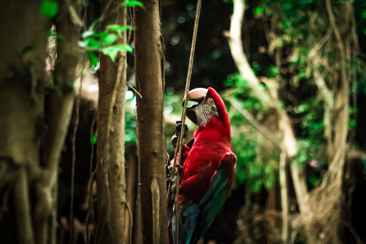 Parrot perching on a tree