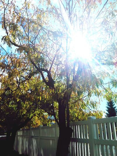 Fall leaves and Summer Dreams Colors Of Autumn Sunnyday☀️