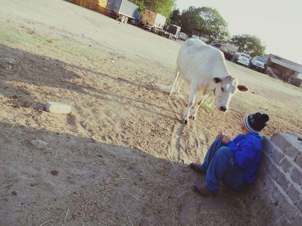 Contacto Sentado Feliz Tenis Sony Chico Guadalajara Paisaje Natural Boy Felicidad Amistad Inocencia Vaca Animals Animal