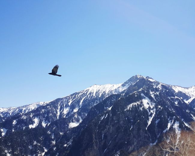 Snow Mountain Japan Photography Japan 黑部立山 鳥 Birds