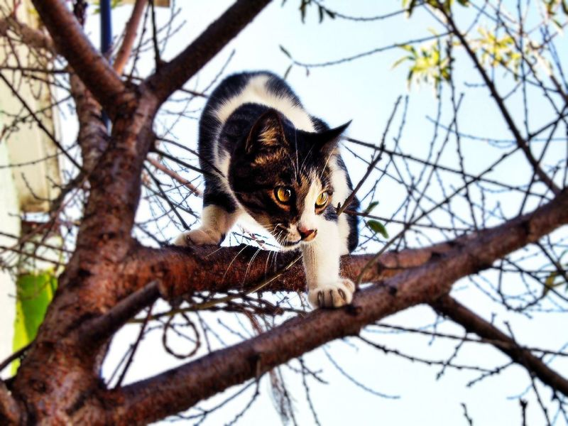 Prey. EyeEm Nature Lover Nature First Eyeem Photo Cute Kitten Kittens Cat Lovely Cats Cute♡ Cutepets Cats Of EyeEm Cute Pets I Love My Cat ❤ Catlovers Cute Cat♡ Cats 🐱 Catsoneyeem Kitty Cat Lovers Adorable Cute Animals Pet Cat Hunting  Cat Chase