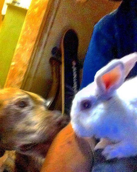 So adorable... Bestfriends Besties Fluffybunny Sillydog