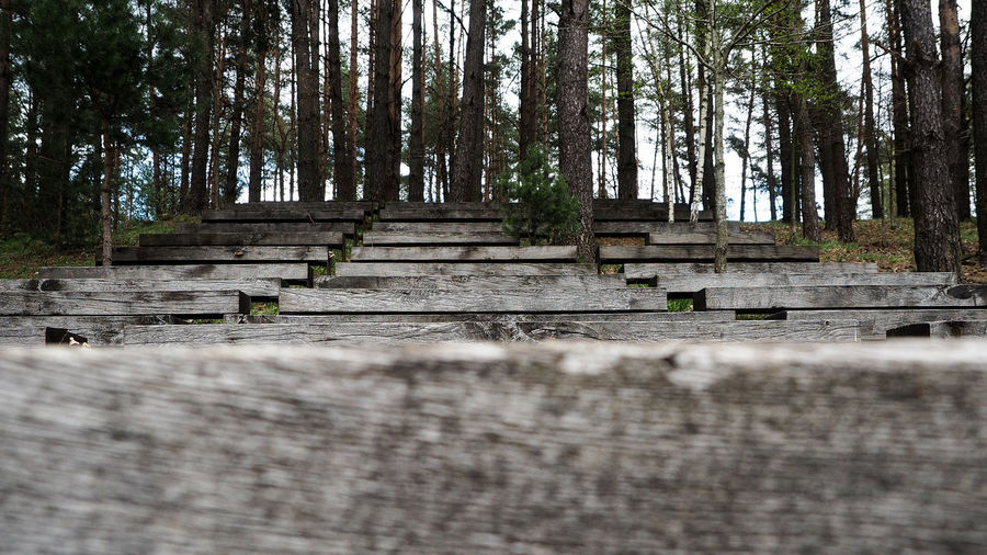 Low angle view of wooden staircases in forest