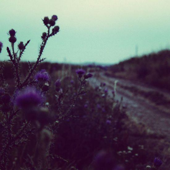 Der Weg zu einem kleinen Haus in mitten von einigen Bäumen. Nachdenklich machender weg bei diesem grauen und melancholischem Himmel hier Moody Travel Slowakia Flower Flowers