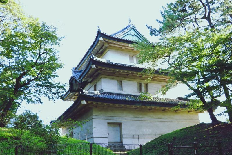 Japan Tree Architecture Building Exterior Built Structure Religion Roof Low Angle View Pagoda Day No People Place Of Worship Eaves Traditional Building Outdoors Travel Destinations Branch Sky Nature