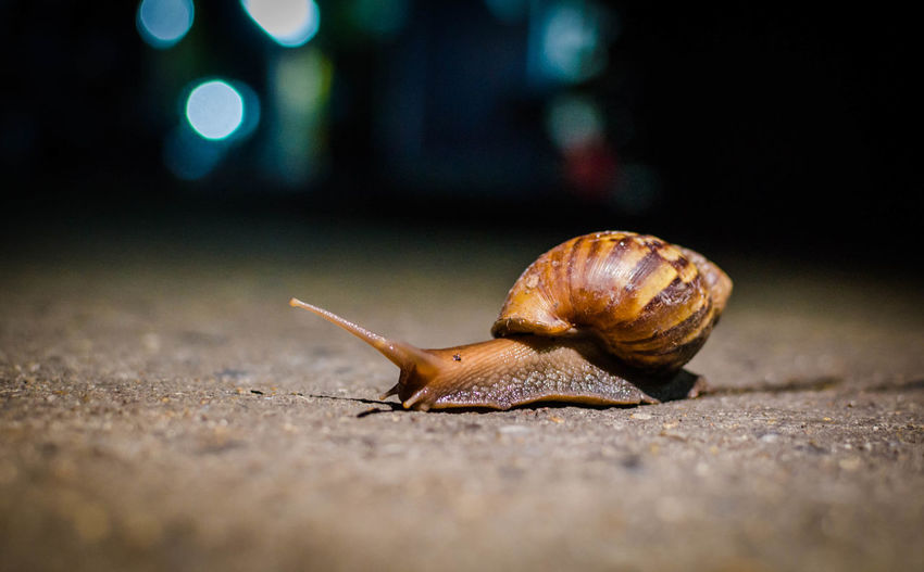 Close-up of snail on road at night