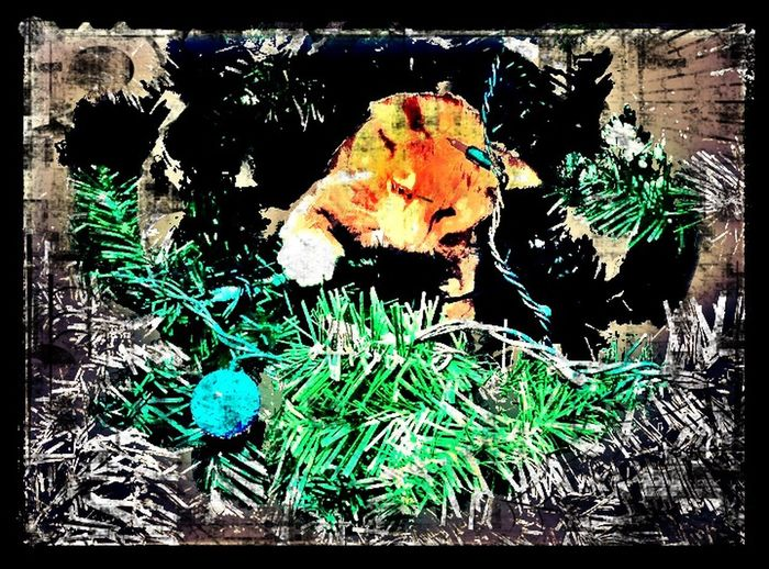 EE_Daily: Orange Tuesday Cat Kitten Christmas Tree Ornaments Decorating Christmas Cats Digital Art Icolorama IPhoneArtism