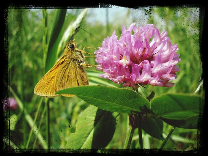 Amazing.. Flower & Butterfly Butterfly Have A Lunch Fly Around This Is My Amazing World