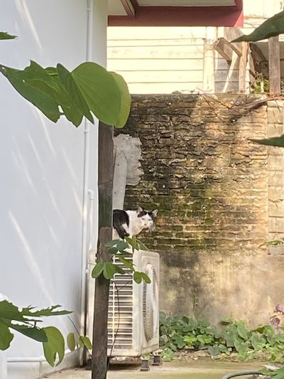 View of a cat looking at building