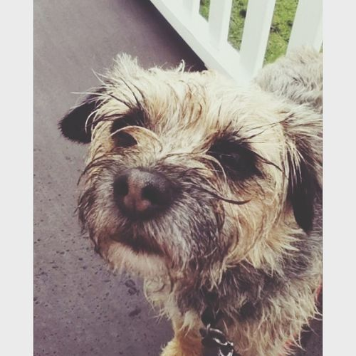 so cute my aunties doggy teddy Dogs Shes Adorable Close Up Girl