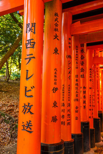 Kyoto, Japan - April 28, 2017: Happy tourist woman jumping under red torii gates of famous landmark Fushimi Inari shrine. Travel asia concept. Freedom and enjoying concept. Kyoto's popular landmark. A giant torii gate in front of Romon Gate at the shrine's entrance of Fushimi Inari taisha. Fushimi Inari is the most important shinto sanctuary and the oldest in Kyoto, Japan. Sunrise light shot. Buddhist Fushimi Inari Fushimi Inari Taisha Fushimi Inari Taisha Shrine Fushimi Inari-taisha Japan Kyoto, Japan Romon Gate Shinto Shrine Shinto Temple TORII Torii Gate Architectural Column Architecture Belief Buddhist Statue Buddhist Temple Built Structure Communication Fushimi Inari Kyoto Fushimi Inari Shrine Kyoto Kyoto,japan No People Non-western Script Orange Color Outdoors Place Of Worship Red Religion Sanctuary  Script Shinto Shintoism Shrine Spirituality Taishan Temple Text Zen