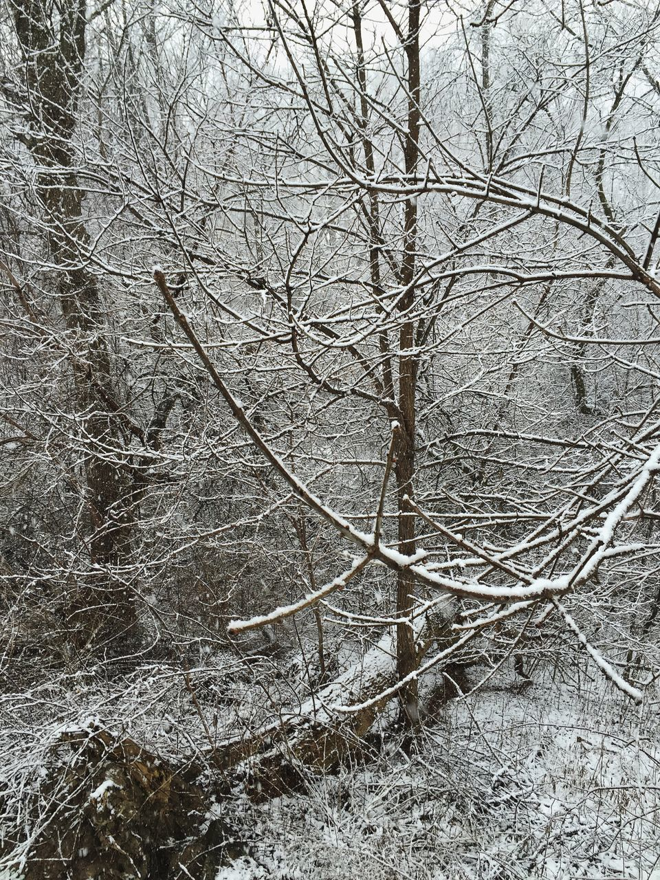 bare tree, branch, nature, tree, no people, day, outdoors, dead plant, tranquility, beauty in nature, winter, dead tree