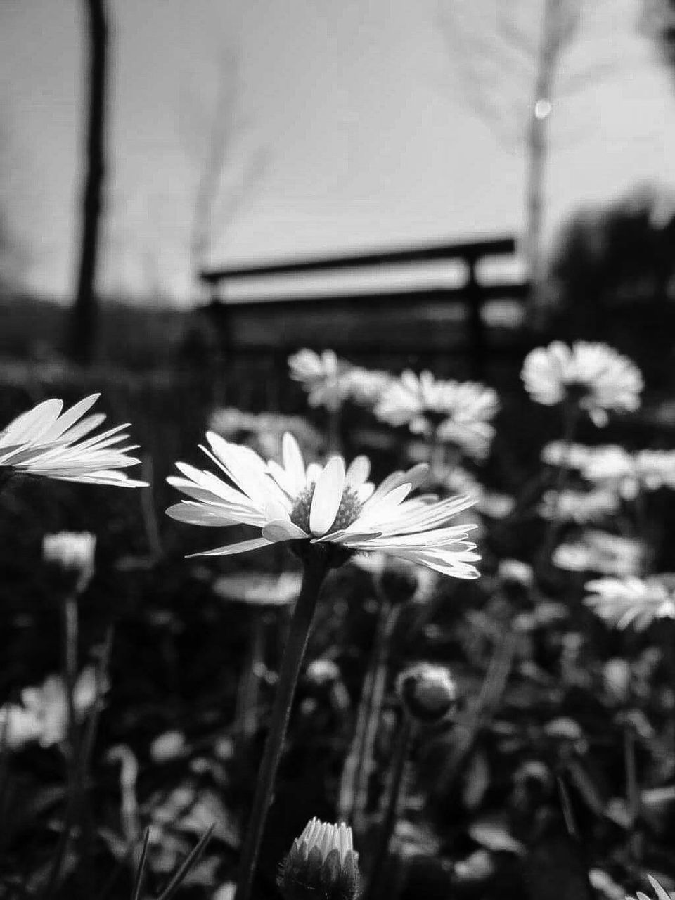 flower, fragility, petal, flower head, freshness, nature, growth, beauty in nature, blooming, focus on foreground, day, plant, stem, outdoors, close-up, no people