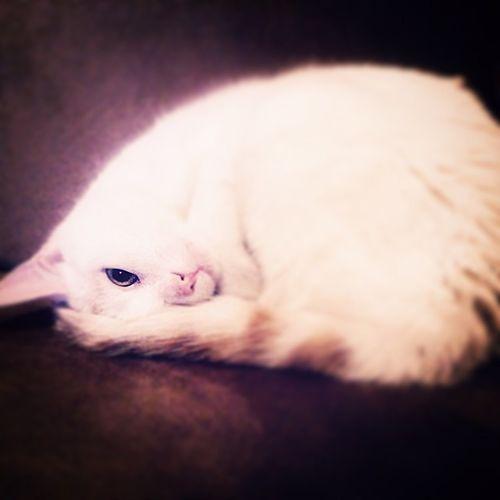 çilek Uyurkendepozveririmki Tatlılıktanölcem 😉 ✌️😻😽 Catlove Cat Kediciler