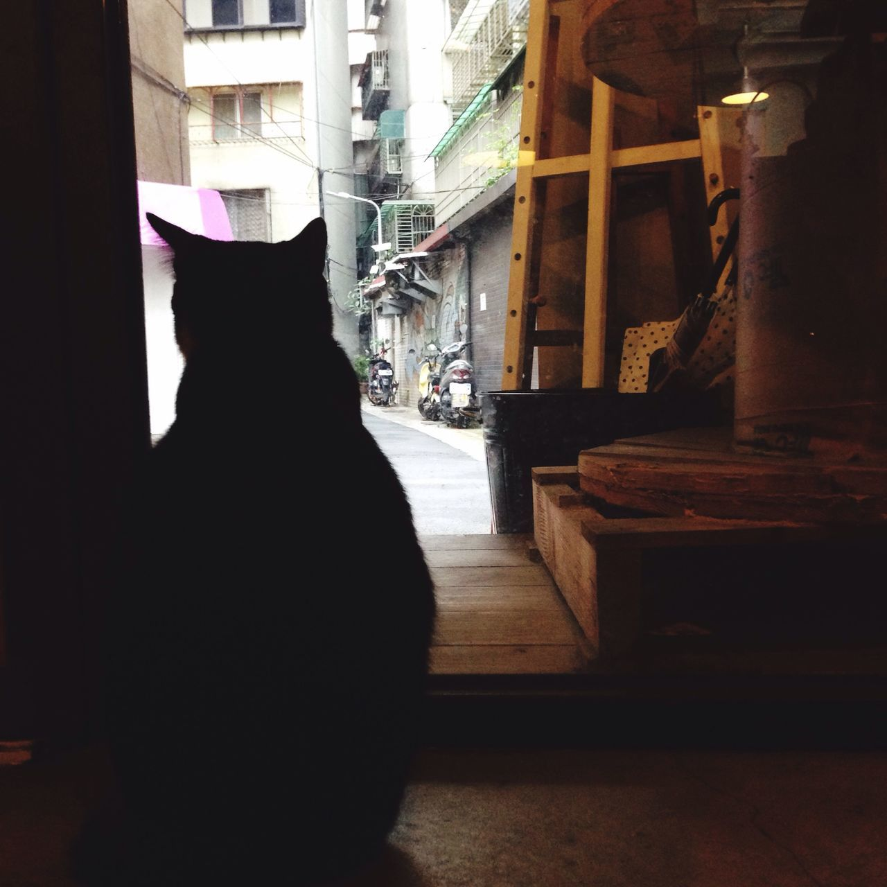 Rear View Of A Silhouette Cat
