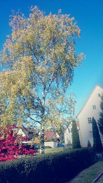 Zarten. Dreisamtal. Herbst, Fall, vintage