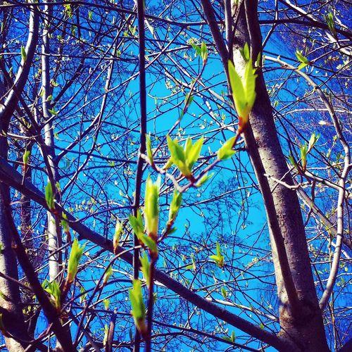 My Life Color Portrait First Eyeem Photo пейзаж красиво деревья мир красота My Love приятныемоменты